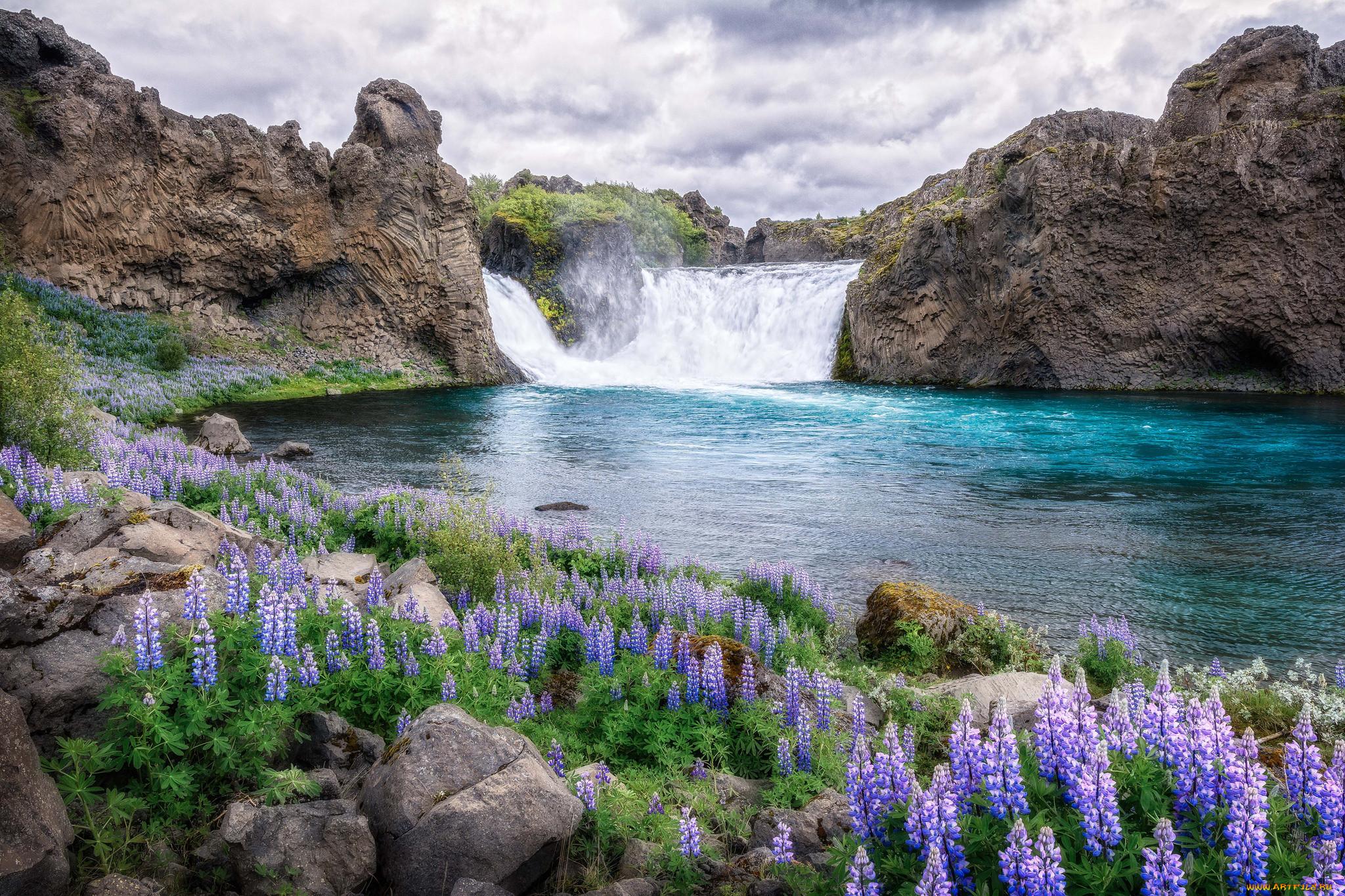 Фото природа цветы и водопады